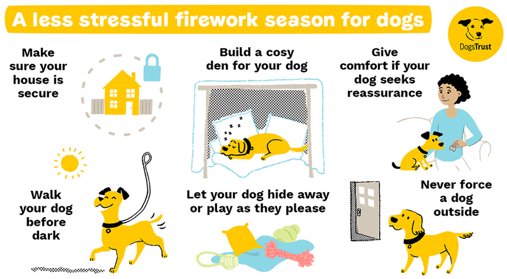 Top tips for dogs on Bonfire Night