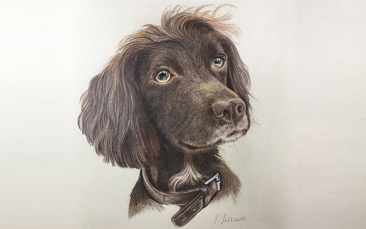 Fellowes Pet Portraits